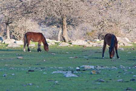 trot: Portrait of horses in the mountain