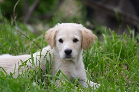 animalitos tiernos: Retrato de perro en el jardín