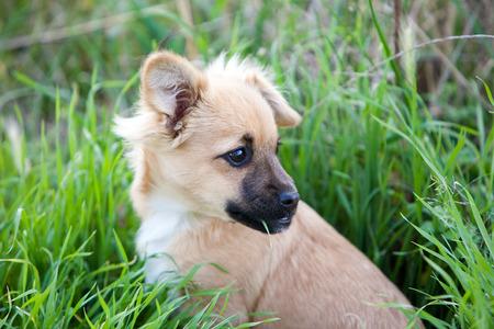 animalitos tiernos: Retrato de perro en el jard�n