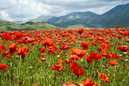 Castelluccio of Norcia, a town in the national park of the Sibillini mountains in Italy. City destroyed by an earthquake in October 30, 2016.
