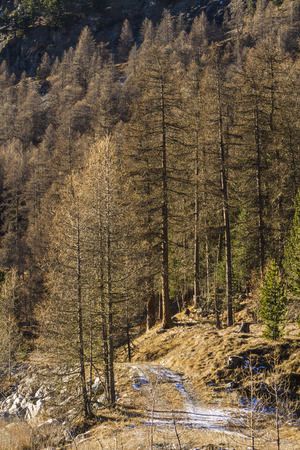 ova: Path on the river Ova de Roseg in Switzerland.