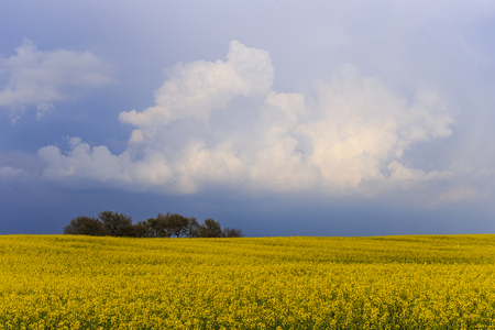 The arrival of the storm on a cultivated field. Stock Photo