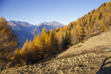 Autumn forest in the mountains of Mortirolo in Valtellina, Italy.  Stock Photo
