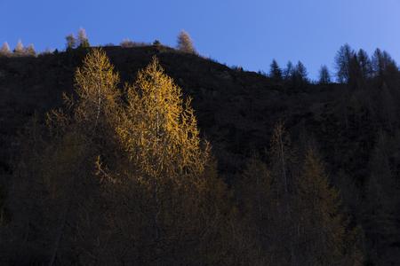 Tree illuminated by the last ray of sun in Valtellina, Italy Stock Photo - 90028636