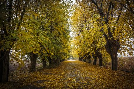 Autumn tree lined avenue in Brescia, Italy. Banco de Imagens