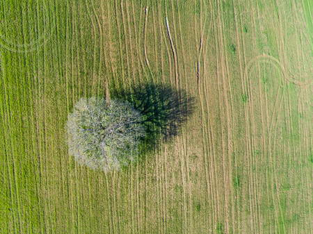 Aerial view of an oak tree in the field. Stock Photo - 100770216