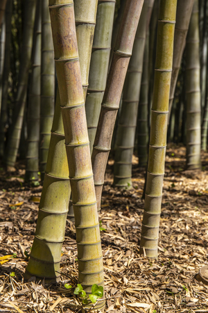 Walking in the bamboo forest.