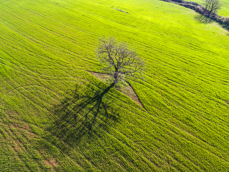 Aerial view of a tree in a plowed field Stock Photo