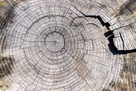 Top view of a cut tree trunk. The signs of aging between the rays and the ribs of an old cut tree trunk.