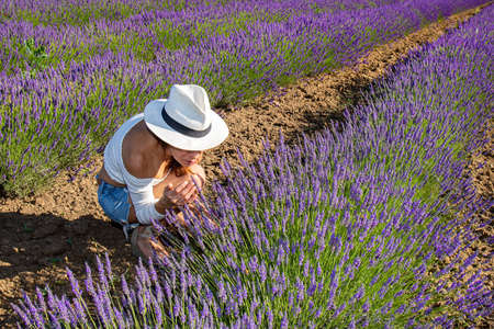 A young woman in a blooming lavender field. She has crouched down to sniff the flowers. Summertime colors. Nature concept. Archivio Fotografico