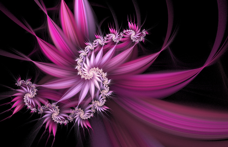 abstract rose: Exotic flowers. Abstract spiral on black background. Computer-generated fractal in white, rose and violet colors.