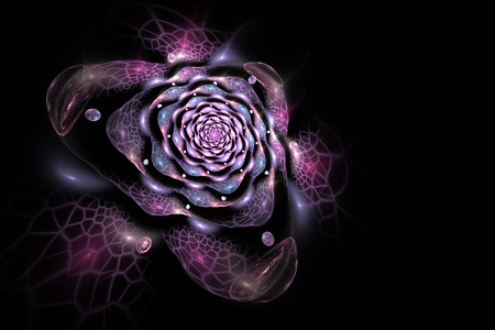 abstract rose: Abstract colorful rose flower on black background. Fantasy pink and purple fractal design for postcards or t-shirts. 3D rendering.