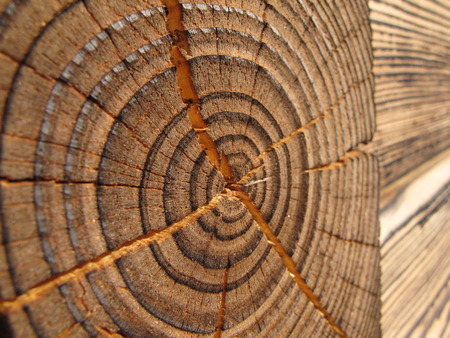 hause: Element in wooden hause, Poland