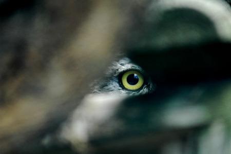 animal eye: Occhio di animale, Kadzidlowo, Polonia Archivio Fotografico