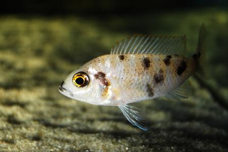 briny: Beautiful fish in the aquarium