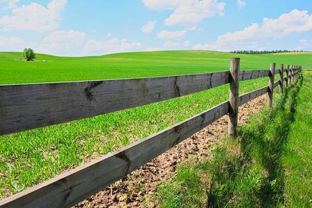 feld: Green feld in village Poland