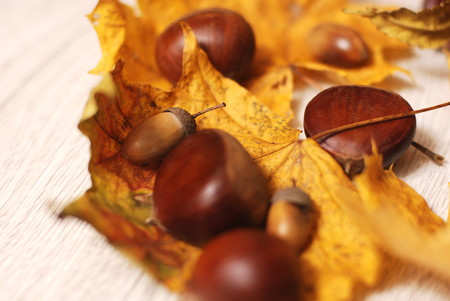 glands: Composition of autumn leaves, acorns and chestnuts