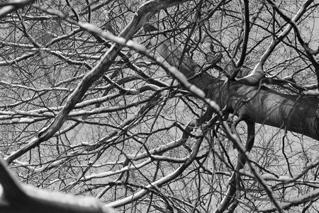 ramification: Branches on the tree, Poland Stock Photo