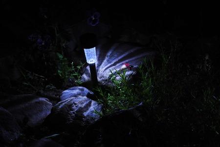 luminosity: LED light in the garden