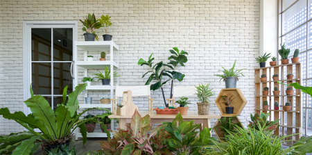 Leisure corner in office building Decorated with potted plants and various types of cactus. Reklamní fotografie
