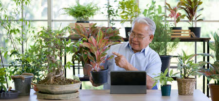 A retired old man spends free time planting potted plants. He uses wireless communication via tablet computers to describe plants to clients. Small home business concept. 版權商用圖片