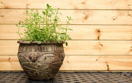 Oregano Plant in decoratieve Pot van de Klei Stockfoto