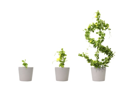 investment concept: growing dollar tree illustrations isolated