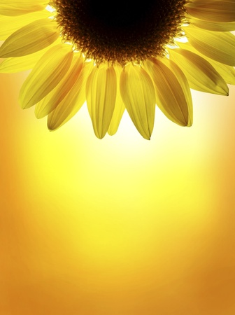 A sunflower on sunset sky Stock Photo - 10258477