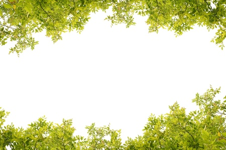 green fresh leaves frame Stock Photo - 10264070
