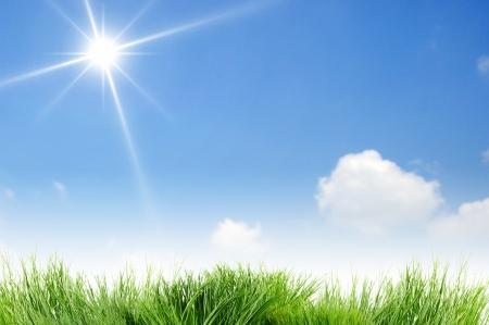 herbe ciel: Soleil et ciel bleu clair vierge