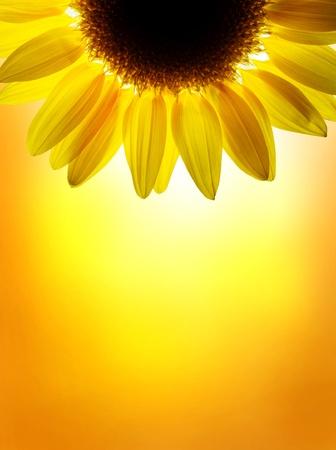 vibrant colours: A sunflower on sunset sky