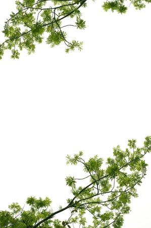 green leaf frame on white Stock Photo - 10288815