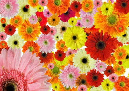 multi colors: A Background of fresh flowers.