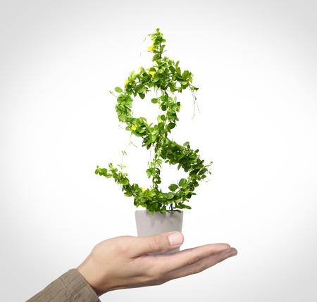 us dollar growing concept Stock Photo - 10346516