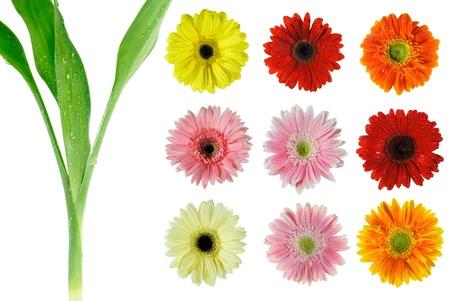 Set summer flowers on white background photo