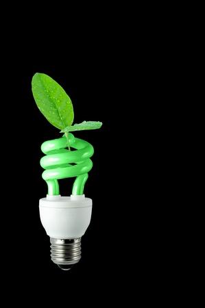bombillo ahorrador: ECO - espiral de hoja verde oscura bombilla