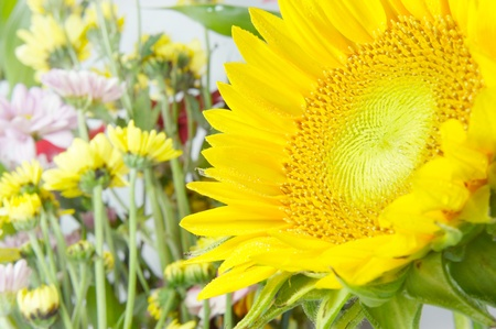 a sunflowers in the garden Stock Photo - 10346585