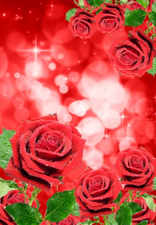 Red rose isolated on bokeh background  photo