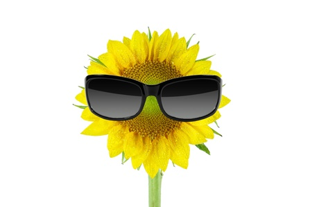 Sunglasses and sunflower isolated on a white photo