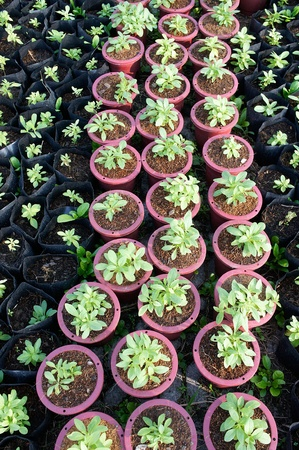 young sprout green plant garden photo