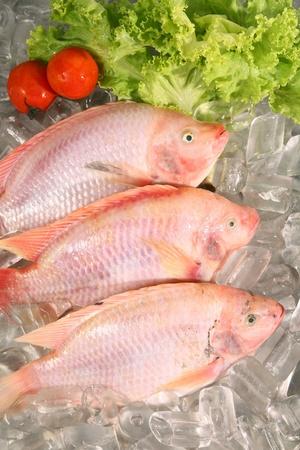 escamas de peces: El pescado fresco Red sobre hielo Foto de archivo