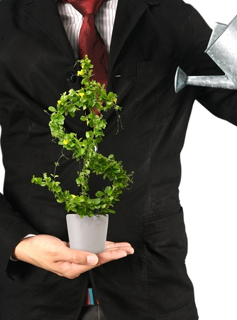 investing: Businessman and  tree with US dollar isolated Stock Photo