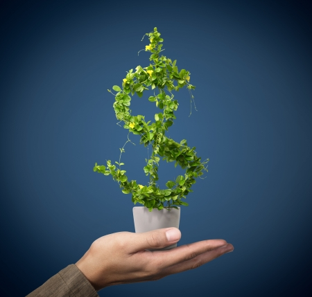 us dollar growing concept Stock Photo - 10710208