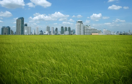 rice field buildings on sky photo