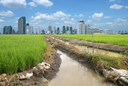 rice field buildings on sky Stock Photo - 10708532