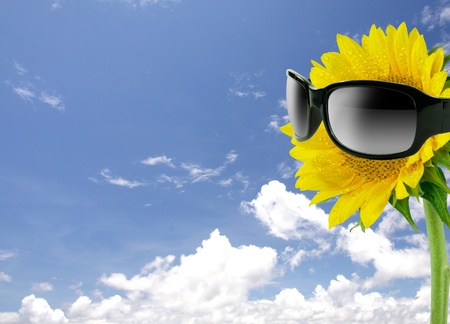 Sunglasses and sunflower on blue sky photo