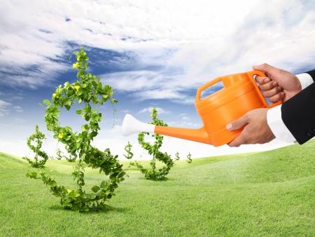 Planta del dinero y el riego de naranja puede Foto de archivo - 11757292