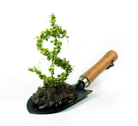 dollar flower paper money invest Stock Photo