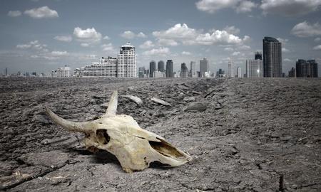 barren land: skull animal on dry land.