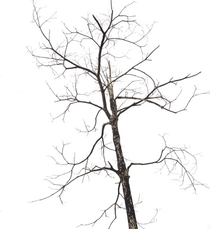 trees Dried. Branches of dead trees and dry isolated. Stock Photo - 12857113